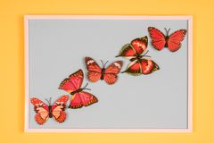 Decorative butterflies. In a white frame on a colored background Stock Image