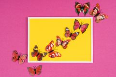 Decorative butterflies. In a white frame on a colored background Royalty Free Stock Photo