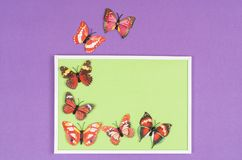 Decorative butterflies. In a white frame on a colored background Royalty Free Stock Image