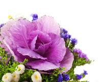 Decorative cabbage is in a bouquet, floral Royalty Free Stock Photography