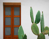 Decorative cactus. With a wood door in the background in the atrium of a colonial house in Oaxaca, Mexico stock photography