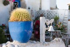 Decorative cactus garden on wall near sea Stock Image