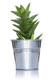 Cactus in a metal pot Royalty Free Stock Photo