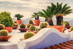 Decorative cactus on roof near sea Royalty Free Stock Photos