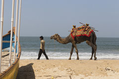 Decorative camel for a photo on the beach. Entertainment for tourists camel riding India, Goa, March 14, 2017 Stock Photography
