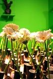 Decorative camomile's Stock Image