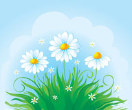 Decorative card with daisy. Nature summer card with daisy vector illustration