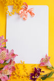 Decorative card with mimosa Royalty Free Stock Photography