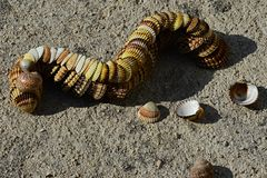 Decorative caterpillar made of bivalve clam seashells on concrete beach molo. Multistage decorative caterpillar made of bivalve clam seashells on concrete beach Royalty Free Stock Images