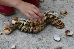 Decorative caterpillar made of bivalve clam seashells on concrete beach molo, small girl hand adding final shells. Multistage decorative caterpillar made of Royalty Free Stock Image