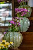 Decorative Ceramic Colorful Flower Pot. Ornaments; Embellish Indoor With Fresh Plants And Flowers royalty free stock photography