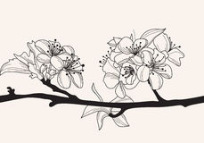 Decorative Cherry Blossom Stock Photo