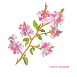 Decorative cherry blossom Stock Photos