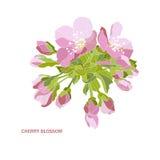 Decorative cherry blossom Royalty Free Stock Photos