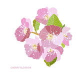 Decorative cherry blossom Stock Images
