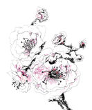 Decorative Cherry flower in blossom. Vector illustration with Decorative Cherry flower in blossom vector illustration