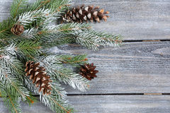 Decorative christmas pine branch with cones Royalty Free Stock Photography