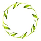 Decorative circle branch of green tea Royalty Free Stock Images