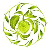 Decorative circle soursop with leaves Royalty Free Stock Photo