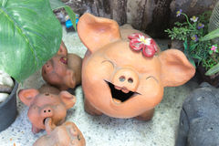 Decorative clay piggy setting in nerve plants garden Royalty Free Stock Photo