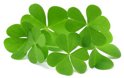Decorative clover leaves Stock Images