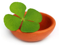 Decorative clover leaves. On a clay pottery royalty free stock photography