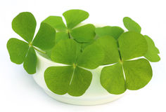 Decorative clover leaves. On a white bowl royalty free stock photo