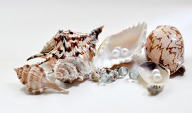 Decorative cockleshells Royalty Free Stock Photography