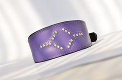Decorative collar for a dog stock photography