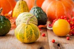 Decorative colored mini pumpkins Royalty Free Stock Photos