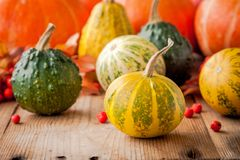 Decorative colored mini pumpkins Stock Photography