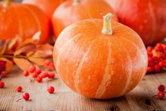Decorative colored mini pumpkins Stock Image