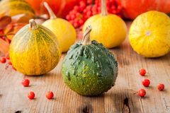 Decorative colored mini pumpkins Royalty Free Stock Images