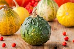 Decorative colored mini pumpkins Stock Photo