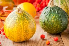 Decorative colored mini pumpkins Royalty Free Stock Photos
