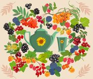 Decorative colorful background with berries for tea. Vector illustration. Colorful set of cup and teapot with different berries tea Royalty Free Stock Photo