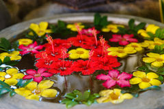 Decorative colorful exotic flowers in the water for Spa-salon Stock Photos