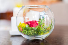 Decorative colorful plants in glass bowl Royalty Free Stock Image
