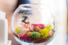 Decorative colorful plants in glass bowl Stock Image