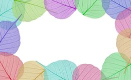Decorative colorful skeleton leaves Royalty Free Stock Images