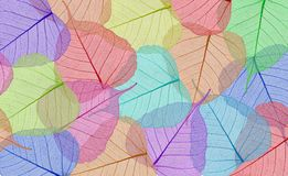 Decorative colorful skeleton leaves Stock Photography