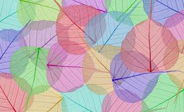 Decorative colorful skeleton leaves Stock Images