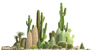 Decorative composition composed of groups of different species of cacti, aloe and succulent plants isolated on white background. F. Ront view. 3D rendering vector illustration