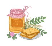 Decorative composition with jar of sweet honey, pair of toasts lying on plate, acacia branch and clover flower isolated. On white background. Colorful hand stock illustration