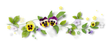 Decorative composition with pansy flowers Stock Image