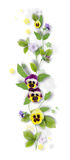 Decorative composition with pansy flowers Stock Photos