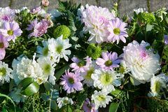 Decorative composition of white, pink chrysanthemum flowers, autumn bouquet. Decorative garland of chrysanthemums. Decorative composition of white, pink royalty free stock image