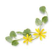 Decorative composition from yellow flowers Stock Photography
