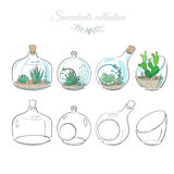 Decorative compositions with succulents. Set of decorative floral compositions with succulents in glass vases and bottles, vector floral illustrations Royalty Free Stock Photos