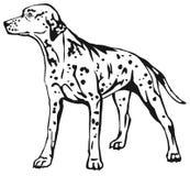 Decorative standing portrait of dog Dalmatian vector illustratio Stock Photo